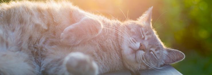 nemoce u koček